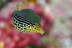 Wakatobi Fish